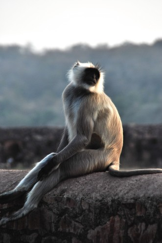 Thoughtful Monkey
